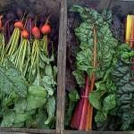 Camden-Farmers-Market1