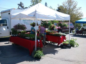 Cumberland-Farmers-Market-in-Falmouth
